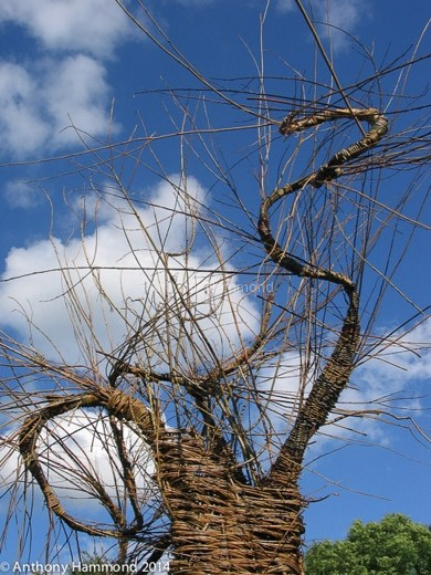 013-woven_willow_tree_13_-2-2