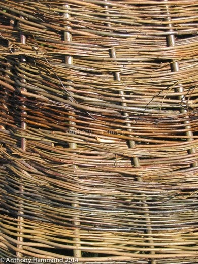 016-woven_willow_tree_11_-2-2