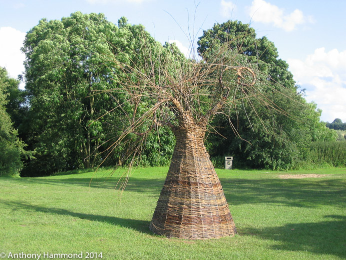 014-woven_willow_tree_5_