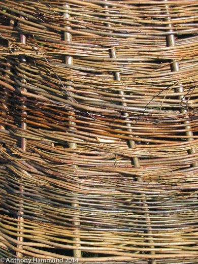 Woven Willow Tree