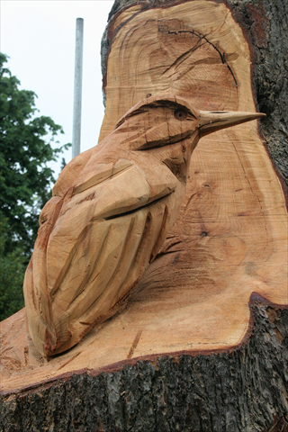Anthony Hammond carved kingfisher detail on his wolseley bridge tree carving